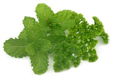 Fresh parsley with mint leaves Royalty Free Stock Photography