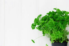 Fresh Parsley in a Pot Royalty Free Stock Photos