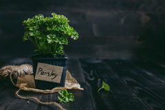 Fresh parsley in pot on the wooden background with copy space.  stock photos