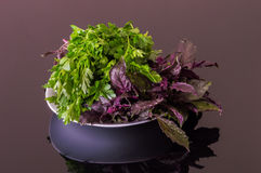 Fresh parsley and purple basil on a black reflective table Royalty Free Stock Image