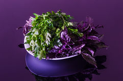 Fresh parsley and purple basil on a black reflective table Stock Photos