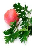 Fresh parsley and radish Stock Photos