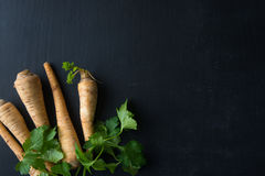 Fresh Parsley Root Royalty Free Stock Images