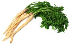 Fresh parsley root isolated on white background royalty free stock images