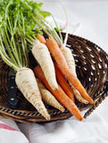 Fresh parsley roots and carrots Royalty Free Stock Image