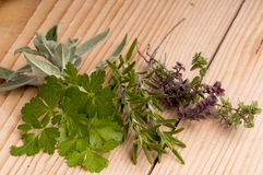 Fresh parsley, sage, rosemary and thyme. Stock Image
