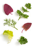 Fresh parsley and salad leaf isolated on white Royalty Free Stock Images