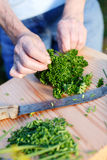 Fresh parsley Royalty Free Stock Photo