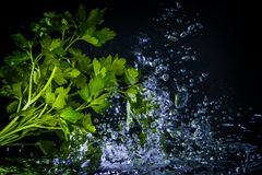 Fresh Parsley Splashing Into Water Over Black Stock Image
