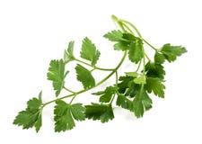 Fresh parsley sprig Stock Photo