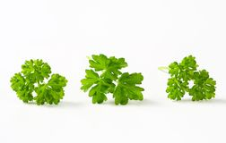 Fresh parsley sprigs Royalty Free Stock Image