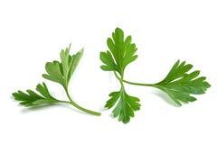 Fresh parsley sprigs Royalty Free Stock Photo