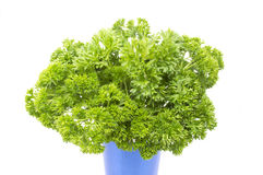 Fresh parsley. View of a fresh parsley bouquet over white background royalty free stock photos