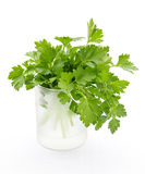 Fresh parsley on white background Stock Image