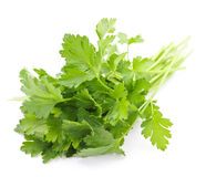 Fresh parsley on white background Royalty Free Stock Image