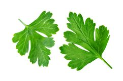 Fresh Parsley. On a white background. toning. selective focus stock photos