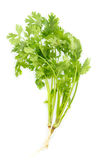 Fresh parsley on white Royalty Free Stock Photography