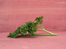 Fresh parsley Stock Photography