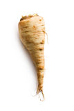 Fresh parsnip stock image