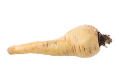 Fresh parsnip roots on a white background.  Royalty Free Stock Photos