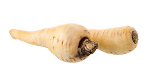 Fresh parsnip roots on a white background.  Royalty Free Stock Photo