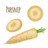 Fresh parsnip vegetable. Organic vegetarian food. Catroon flat style. Stock Photography