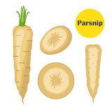 Fresh parsnip vegetable. Organic vegetarian food. Catroon flat style. Royalty Free Stock Images