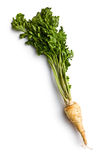 Fresh parsnip Royalty Free Stock Photography