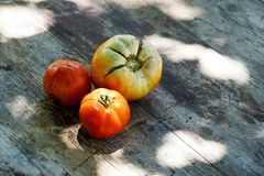 Fresh partially ripen tomatoes on a wooden surface Royalty Free Stock Photos