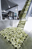 The fresh pasta industry. Automated food factoy make excellent fresh pasta Royalty Free Stock Photos