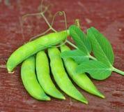 Fresh pea Stock Images