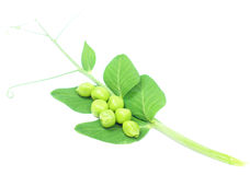 Fresh pea Royalty Free Stock Photos