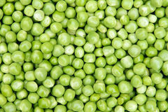 Fresh pea Stock Image