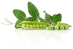 Fresh pea with green leaves Stock Images