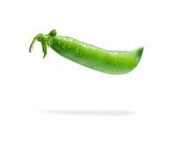 Fresh pea pod, closeup  Royalty Free Stock Images