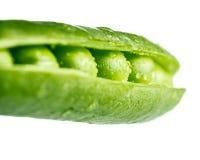Fresh pea pod, closeup  Royalty Free Stock Photo