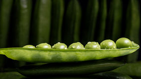 Fresh pea pod, closeup  Royalty Free Stock Image