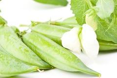 Fresh pea pods Royalty Free Stock Photos