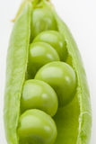 Fresh pea pods Royalty Free Stock Image