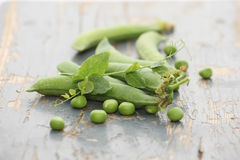 Fresh pea pods on a background of colored  boards Royalty Free Stock Photos