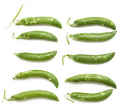Fresh pea pods of different size and shape Stock Images