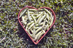 Fresh pea pods in heart form wicker basket Stock Photos