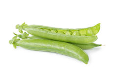 Fresh pea pods Stock Image