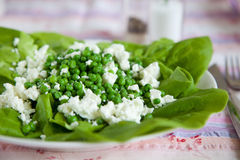Fresh pea salad. Fresh salad with peas, feta and salad leaves tossed with olive oil Royalty Free Stock Photography