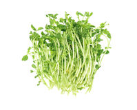 Fresh Pea Sprouts Royalty Free Stock Images