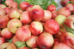 Fresh Peach Stock Image