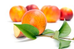 Fresh peach fruits with green leaves Stock Photography
