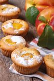 Fresh peach muffins sprinkled with powdered sugar Stock Image