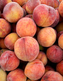 Fresh Peaches. Pile of fresh just harvested peaches at local farm market Stock Photography