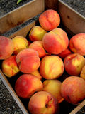 Fresh Peaches. In a wooden crate Stock Photos